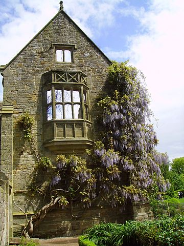 360px-Wisteria_at_Nymans_Gardens,_West_Sussex,_England_May_2006