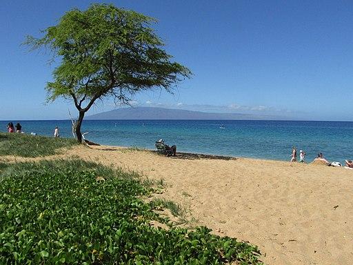 Starr-170321-7440-Prosopis_pallida-on_beach_view_Lanai-Kaanapali_Beach-Maui_(33977969121)